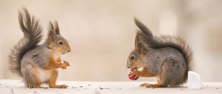 two red squirrels with an football