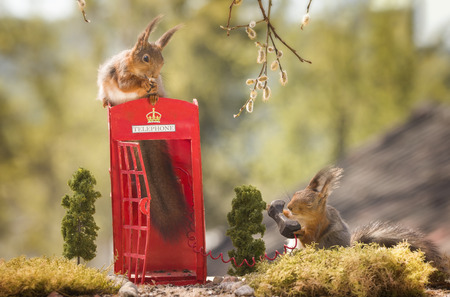 two red squirrels with a telephone booth Reklamní fotografie
