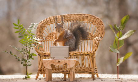 red squirrel watching television on a couch