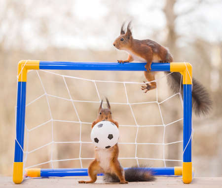 red squirrel as an football goaltender