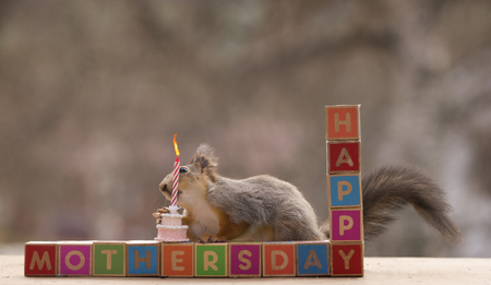 red squirrel holding an cake Stock Photo