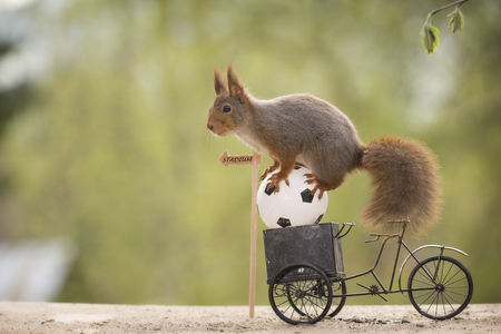 red squirrel on an cycle and an ball  Stock Photo