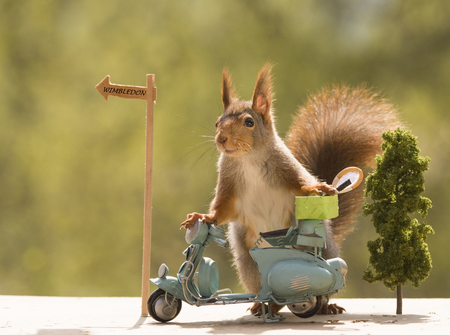 red squirrels with a motorbike with a Tennis Racket
