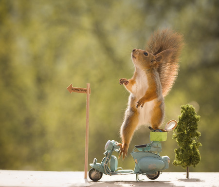 red squirrels on an motorbike with a Tennis Racket