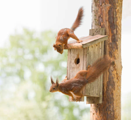 red squirrels are holding on to a birdhouse