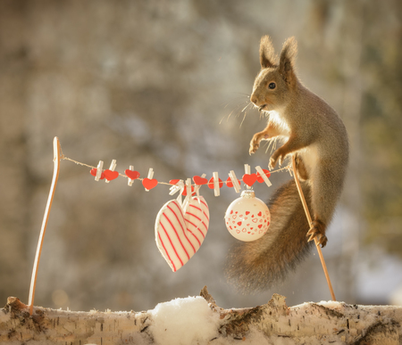 red squirrel standing on a wash line with hearts Stock Photo