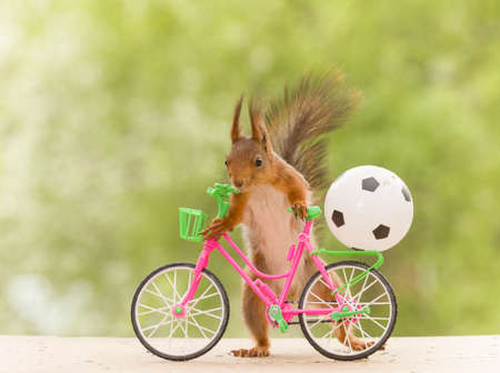 red squirrel with an cycle and a football