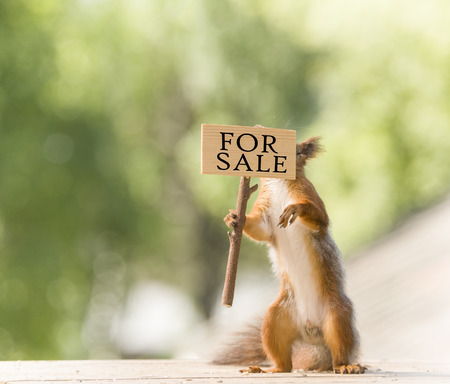 red squirrel holding a for sale sign