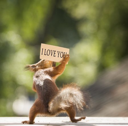 red squirrel holding a i love you sign