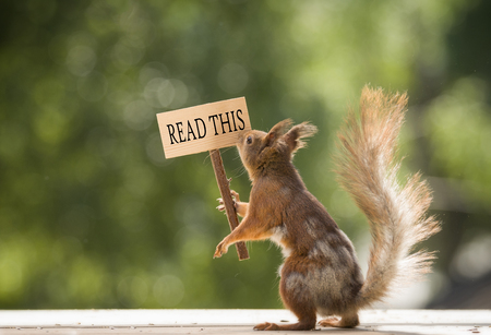 red squirrel is holding a read this sign