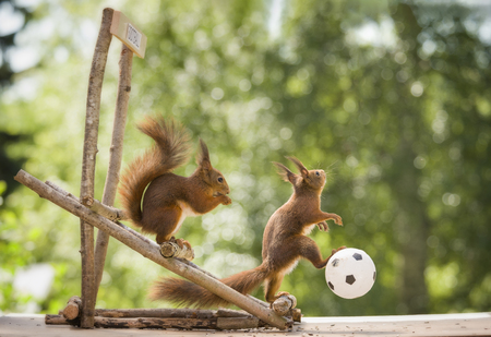 red squirrels with a ball on seats Stock Photo