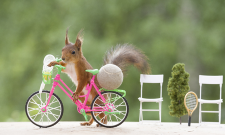 red squirrel with a cycle and a ball Stock Photo
