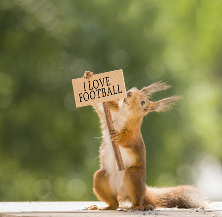 red squirrel holding an i love football sign