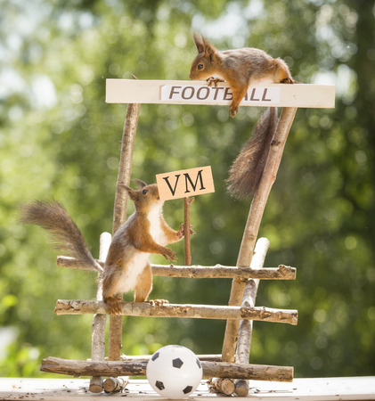 red squirrels holding a WM sign Stock Photo