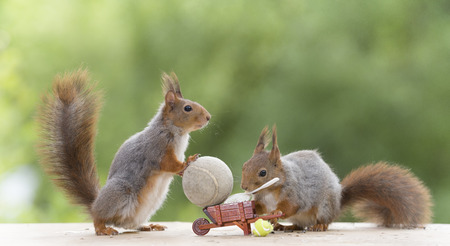 red squirrels with tennis tools on a wheelbarrow