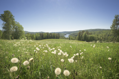 river, dandelion and trees in a mountain landscape Stock Photo