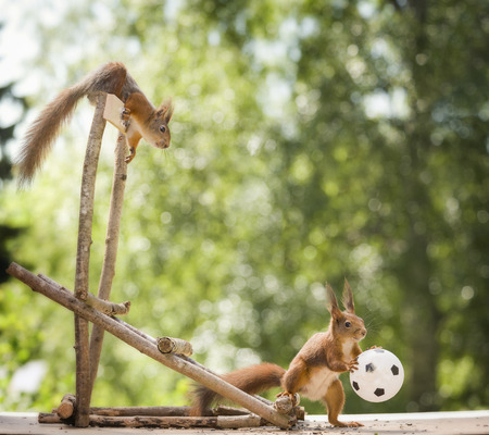 red squirrels with a ball