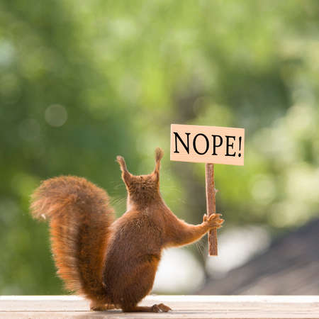 red squirrel is holding a nope sign in hands