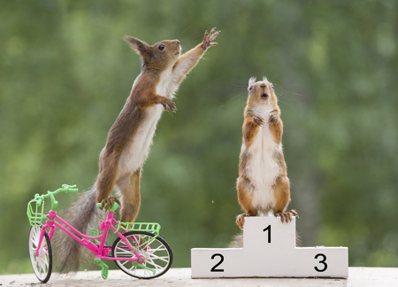 red squirrel is standing on a podium