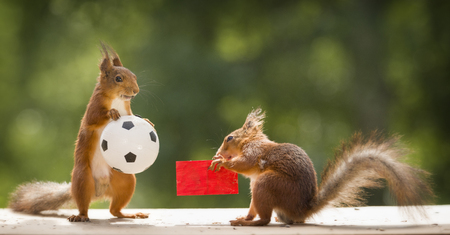 red squirrels holding a red card and a ball