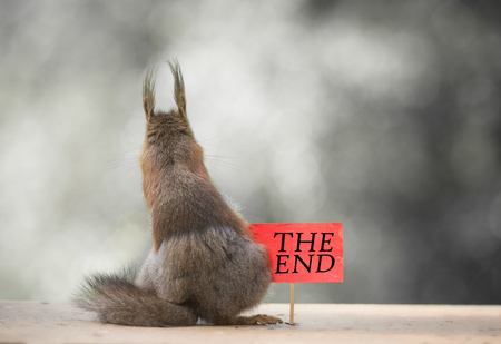 red squirrels with a the end red sign
