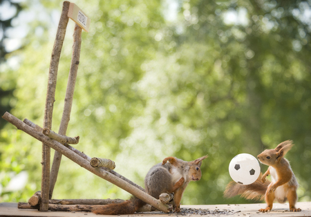 red squirrels standing with a football
