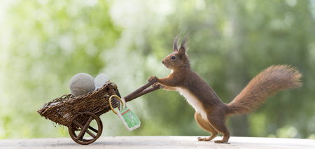 red squirrel with a wheelbarrow with tennis tools Stock Photo