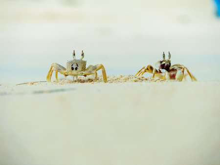 Crab  out of his hole on a white sand beach