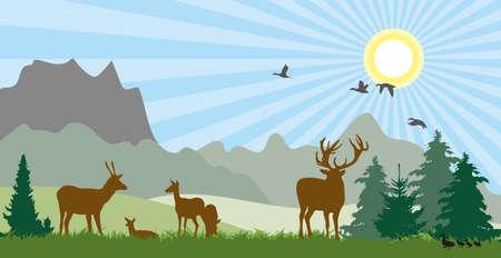 Deer on meadow summer Standard-Bild
