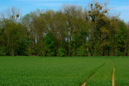 Countryside wood Stock Photo