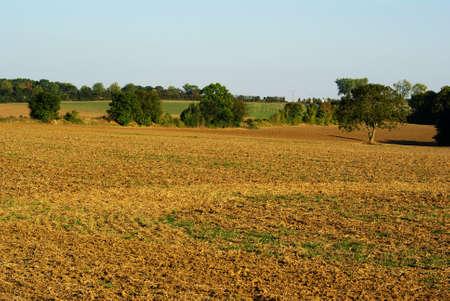 Plowed field in summer