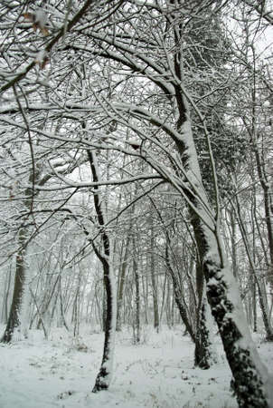 forest in winter Stock Photo