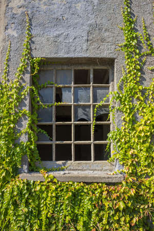 broken window in an old factory with vines around photo