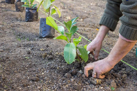 hand tree: Garden worker hands carefully plant at the new apartment block. Hands covering a newly planted with dirt.
