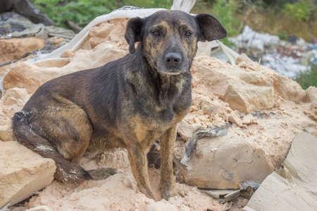 sad, abandoned dog sitting on a pile of waste