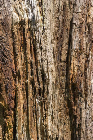 drywood: Wooden texture damaged by fire and woodworm. Woodworm background. selective focus.