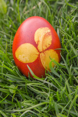 easteregg: Natural dyed easter egg colored with onion skins on meadow. Dyeing Printed Easter Egg. Selective focus and shallow dof.