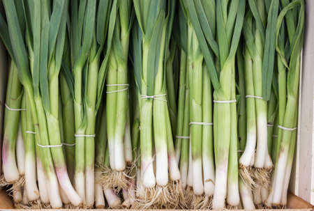 spring onions: bunch of young spring onions, young green garlic leaves for sale at a street market Stock Photo