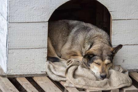 dog house: Dog sleeping in a vintage dog house
