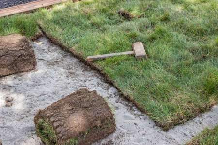 sod: installing sod, lawn and sod Installation. Selective focus. Stock Photo