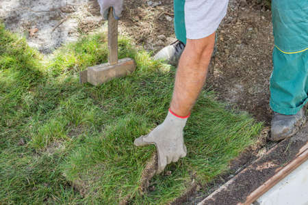 Worker installing sod, lawn and sod Installation. Selective focus.