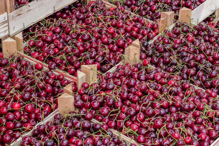 growers: Farmers market organic cherrys in a wooden crates. At the farmers market local growers come and sell their freshly picked crops at reasonable prices. Selective focus. Stock Photo