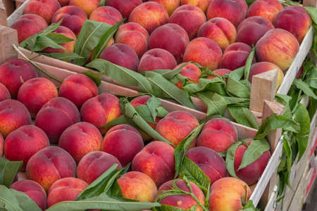 growers: Farmers market peaches in a wooden crates. At the farmers market local growers come and sell their freshly picked crops at reasonable prices. Selective focus.