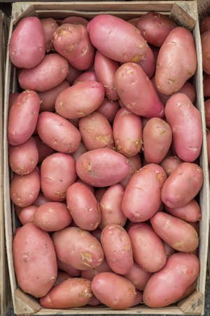 growers: Farmers market red potatoes in a wooden crate background. At the farmers market local growers come and sell their freshly picked crops at reasonable prices.