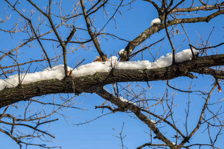 Zweig bedeckt mit geschmolzenem Schnee. Hergestellt mit selektiven Fokus. Standard-Bild - 51012140