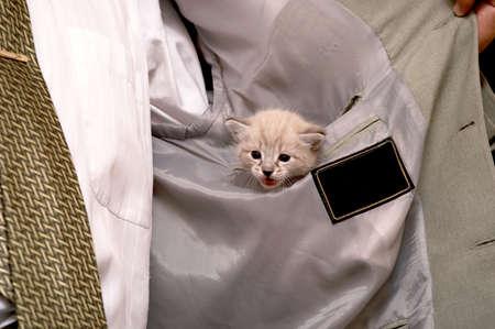 kitten Stock Photo - 1903804