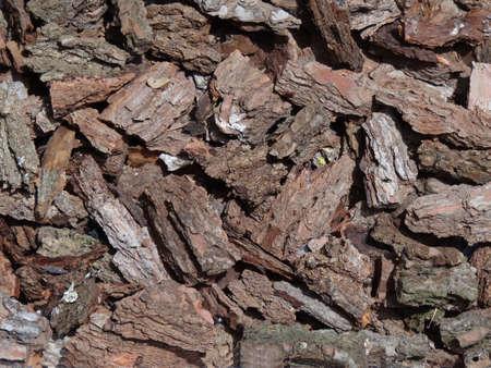 pine bark texture                                photo