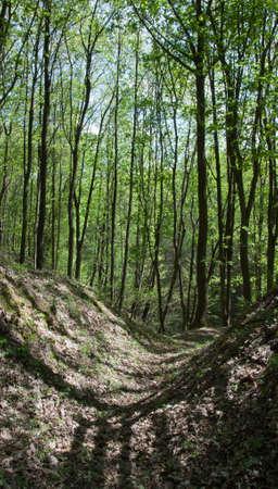 shady: ravine in the shady woods
