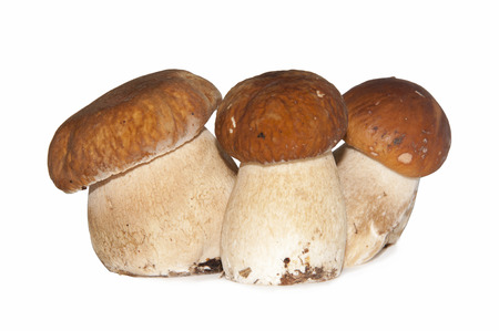 The group of three mushrooms on the white background photo