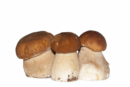 The group of three mushrooms on the white background
